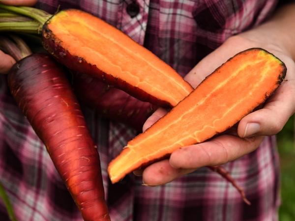 carrot-purple-dragon-lss-dsc_0046